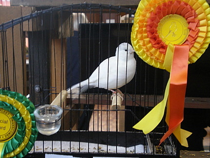 A winning border canary